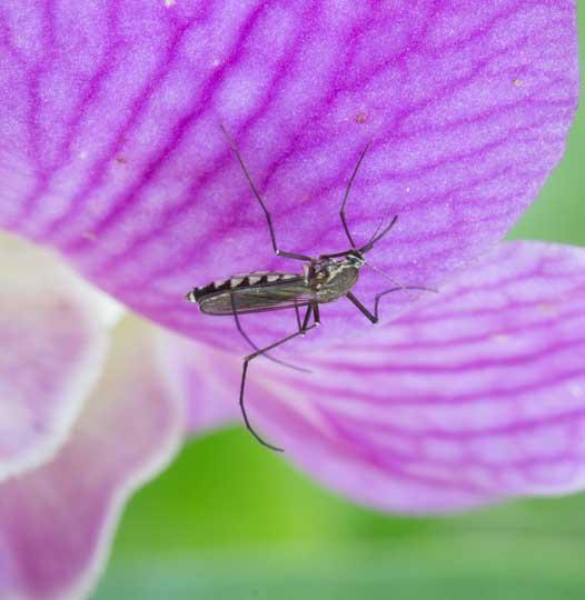 Melbourne Mosquitoe Control Services
