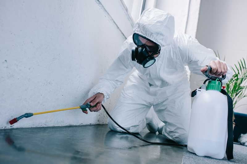 Remove Pests from your Home - Melbourne