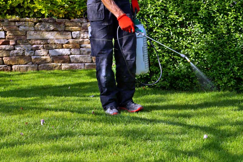 Pest Control Services Spraying