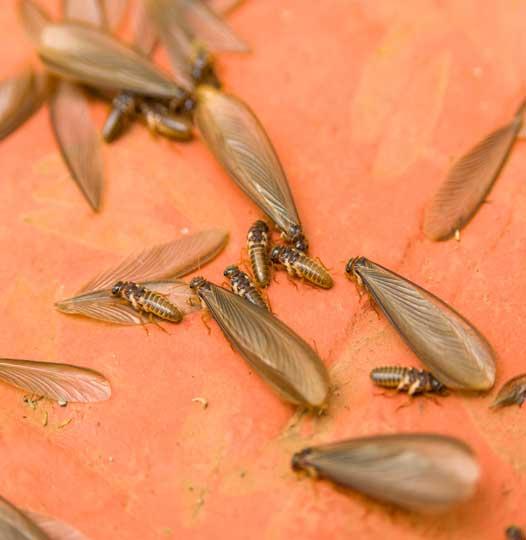 Melbourne Termite Control Services