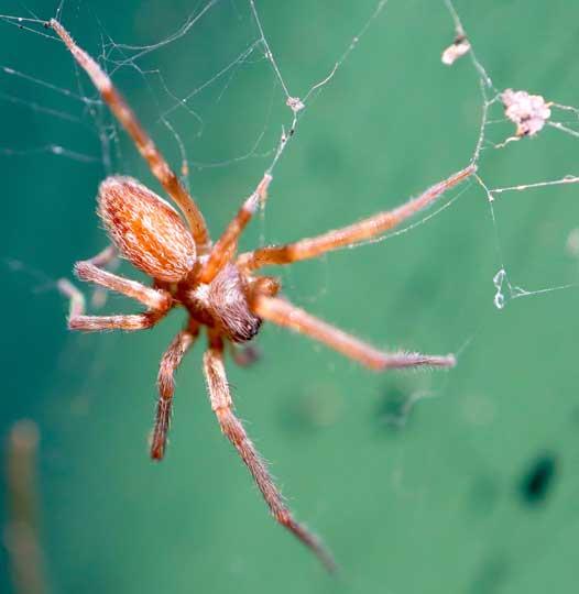 Melbourne Spider Control Services