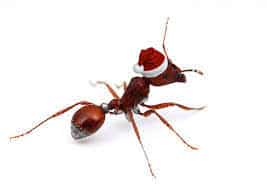 Pest control christmas time