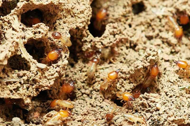 Best Pest Control Service Mornington Peninsula