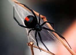 Pest Control Summerville