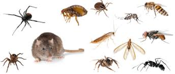 We Treat All Pests and Bugs