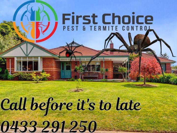 Pest Control Spiders
